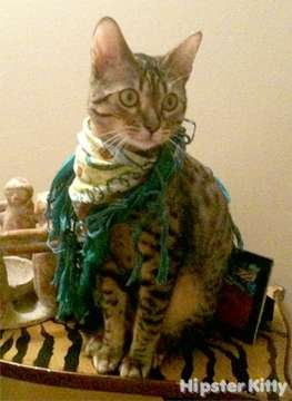 Androgynous Scarf Cat