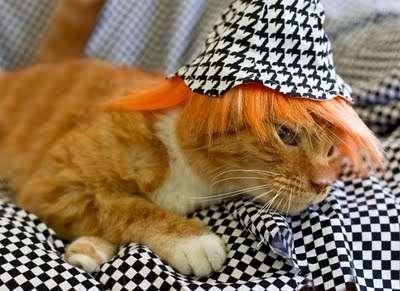 Andy Warhol Kitty