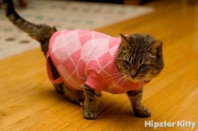Argyle Kitty