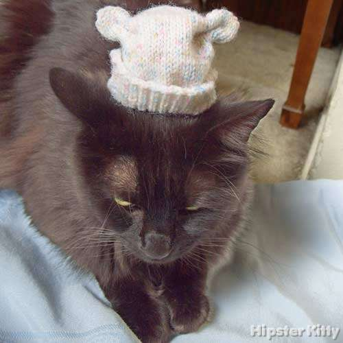 cat in hat. Artsy Hat Cat