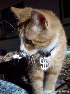 Thug Kitten