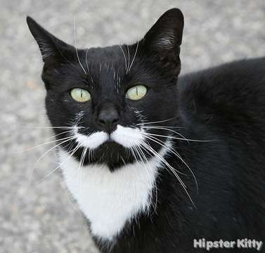 Mustache Cat