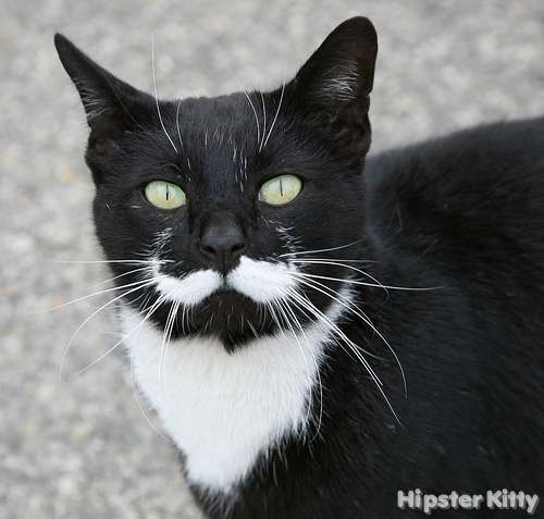 Black And White Cats With Mustaches