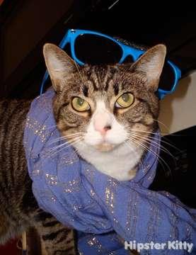 Chillwave Cat