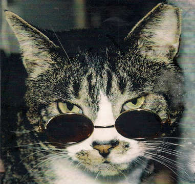 Cool Jazz Cat
