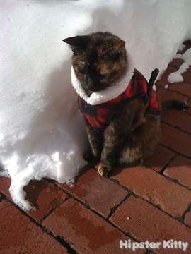 Depressed Hipster Cat