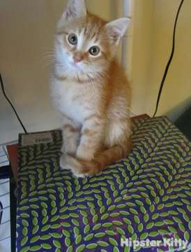 DJ AnCo Kitten