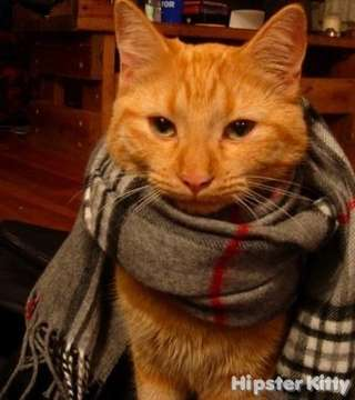 Fancy Pants Cat