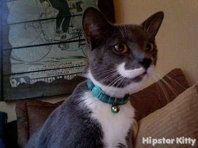 Mustache Wax Kitty