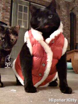 Fashionista Kitty