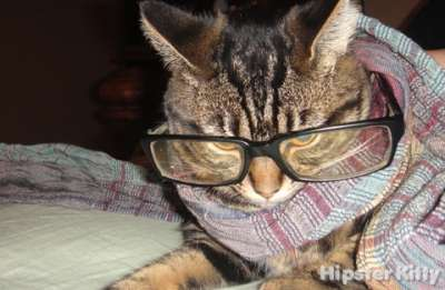 Film Nerd Cat