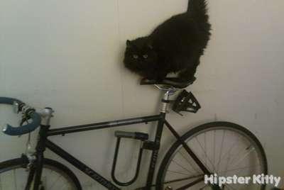 Fixie Cat