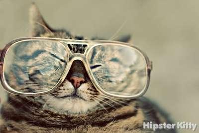 FLAC Cat