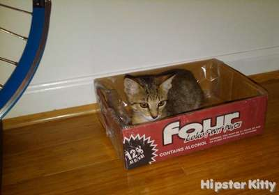 Four Loko Cat