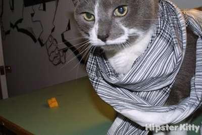 Graffiti Artist Cat