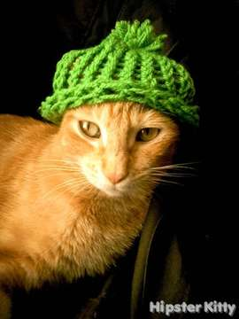 Knitting Circle Cat