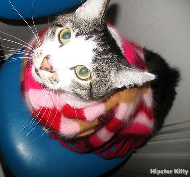 Hipster Scarf Kitty