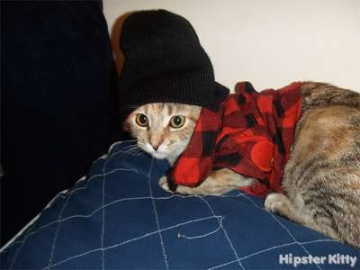 Flannel Cat