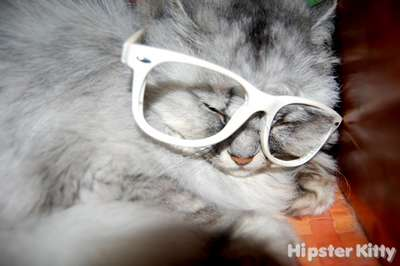 Typical Hipster Kitty