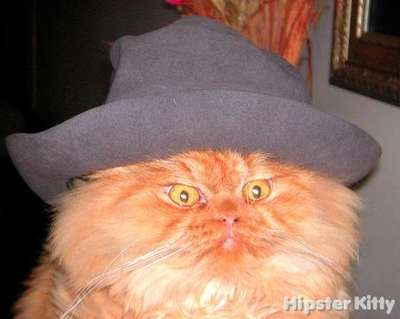 Hipster Hat Cat