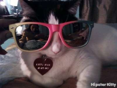 Rayban Cat