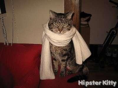 Fancy Scarf Cat