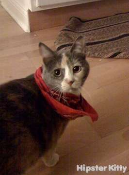 Judgmental Scarf Kitty