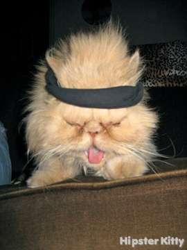 Keith Richards Kitty