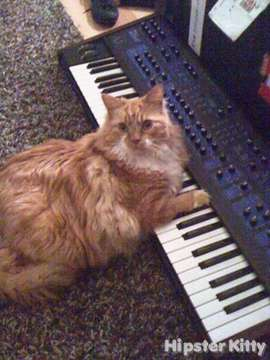 The Real Keyboard Cat
