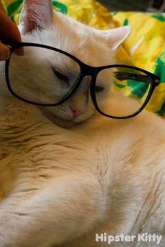 Fake Reading Glasses Kitty