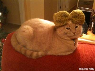 Knitted Bow Cat