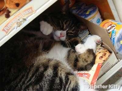 Munchies Cat