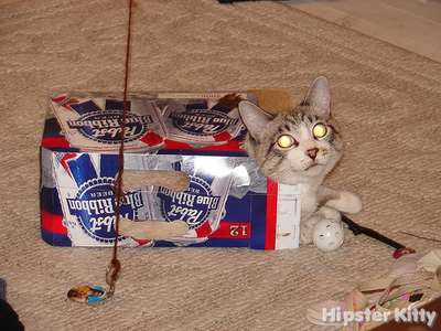 PBR Kitty 2