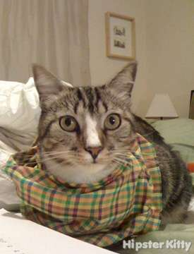 Plaid Scarf Cat