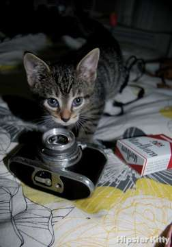 Plastic Camera Kitty