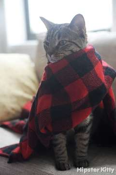 Prayer Scarf Kitty