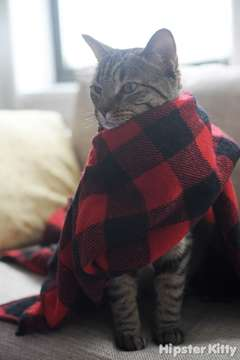 Prayer Scarf Kitty