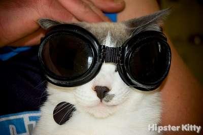 Raver Kitty