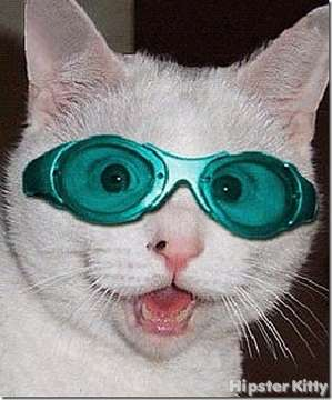 Raver Kitty 2