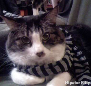 Fancy Scarf Kitty