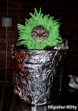 Performance Artist Cat