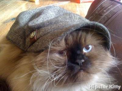 Obey Hat Cat