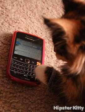 Twitter Kitty