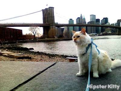 Urban Hipster Cat
