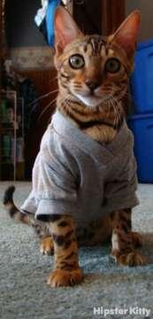 V-Neck Cat
