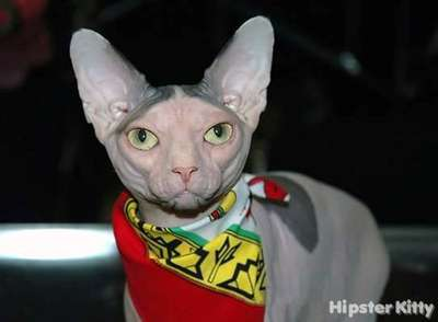 Elder Hipster Cat